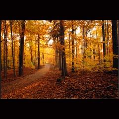 Forest walk (dellafels) Tags: light tree