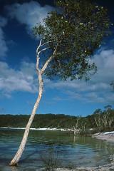 Lake Birrabeen, 1990 (2 photos) (NettyA) Tags: park white lake tree film 35mm island sand sandy great australia slide national bushwalking scanned qld queensland kodachrome fraser 1990 freshwater paperbark birrabeen melaleucas