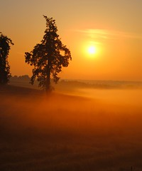 Misty Morning (Tobi_2008) Tags: trees sky sun mist color nature field fog sunrise germany landscape deutschland soleil nebel saxony natur feld himmel ciel sachsen showroom tobi landschaft sonne farbe bume sonnenaufgang allemagne soe shiningstar germania 4m musictomyeyes doubledragon finegold photohobby visionaryarts artistoftheyear eliteclub flickraward flickrdiamond platinumheart naturessilhouettes flickridol goldstaraward thebestshot spiritofphotography thebestshots grouptripod artofimages angelawards saariysqualitypictures bestcapturesaoi naturesprime doubleniceshot fabulousplanet tripleniceshot mygearandme buildyourrainbow dblringexcellence tplringexcellence photographyforrecreation chariotsofartists eltringexcellence qualifiziertemember