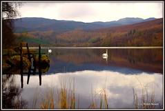 Loch Milldam. (eric robb niven) Tags: autumn scotland swans loch dunkeld milldam