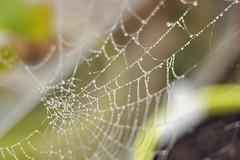 Web (hddod) Tags: web foggy 2011 2011yip