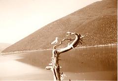 / prespes (vaal lee) Tags: travel lake bird nature water birds boat lakes greece macedonia florina  prespes