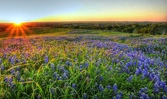 The Sun breathing on the Texas Wildflowers (Ronnie Wiggin) Tags: flowers trees sunset usa nature sunrise fence landscape spring nikon bravo gate texas country wildflowers hdr bluebonnets springtime fenceline d300 bloomingflowers texasbluebonnets diamondclassphotographer flickrdiamond nikond300 ennisbluebonnettrails rwigginphotos ronniewiggin ronniewiggin