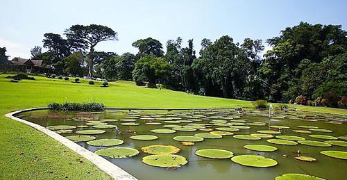 giardino Botanico Bogor