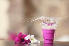 بروجيكت السبلاش ()* (ندى القحطآني || Nada al.qahtani) Tags: ورود ورد ماء جميل صباح موية فوشي سبلاش