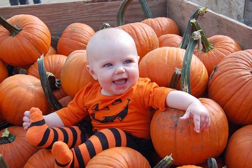 Scout in Pumpkins 01