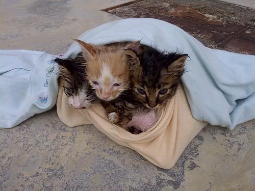 Kittens after a bath