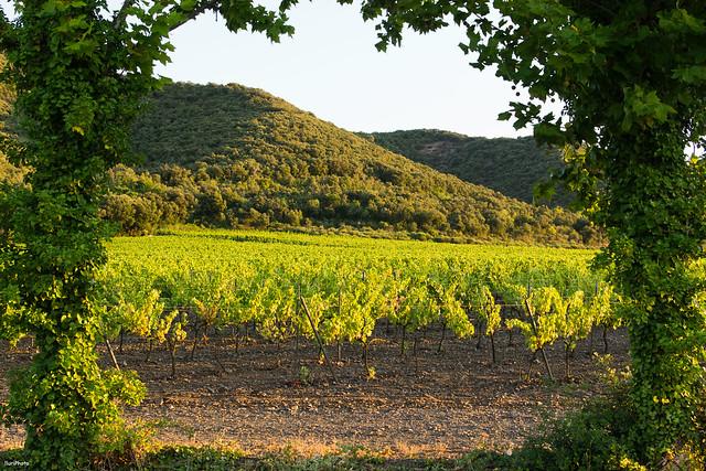 Ventana a los viñedos