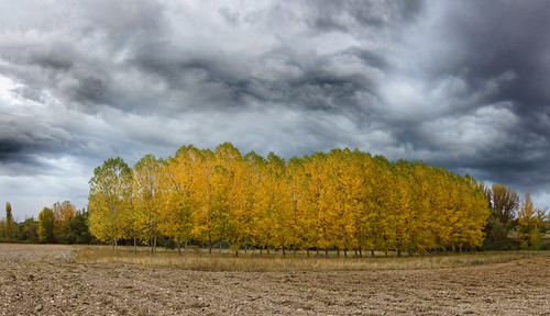 Panoramica arboleda en otoño