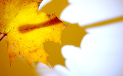 The Autumnal Paintbrush (1)