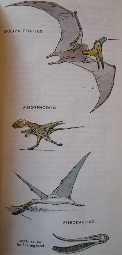 Peterson First Guides: Dinosaurs p. 101