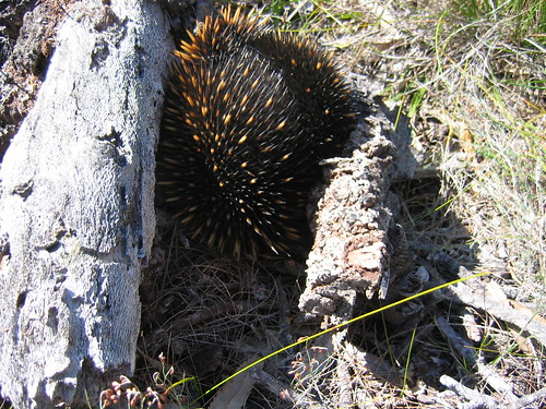 Light to light walk echidna