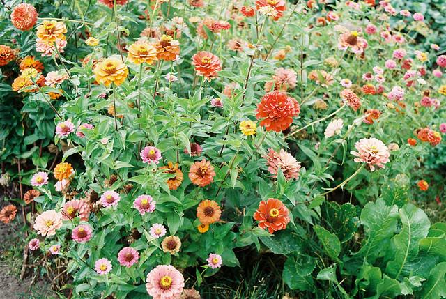 bel_flowers