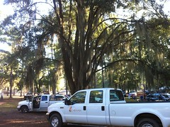 Oaks and Spanish Moss