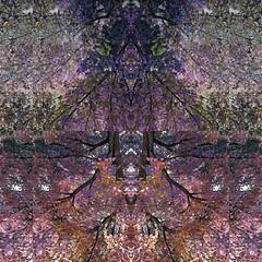 (EYECCD) Tags: autumn trees abstract fall strange delete10 delete9 square delete5 delete2 colorful delete6 delete7 delete8 delete3 delete delete4 save symmetry mirrored gf1 deletedbydeletemeuncensored