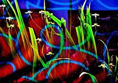 expressionism (Buyung Mukawi (OFF)) Tags: artisticphotography colourartaward phoddastica