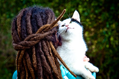 Dreads and Cat (2 de 2) (Juan Antonio Cap) Tags: animal dreadlocks cat hair kat feline chat gato hardcore felino katze mace reggae  dreads gatto  rasta kot gat koka kedi pelo cabello kissa  capelli kttur maka kucing pusa rastas cheveux mo melena moix     minino       pisic       dreadlooks canoneos5dmarkii