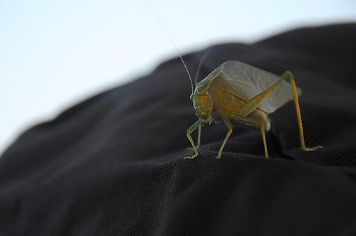 Day 296 - Katydid by Tim Bungert