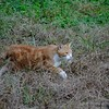 a stray cat in Fudoh-Pond (1/3) (macpapaja) Tags: wild nature cat canon square exf1