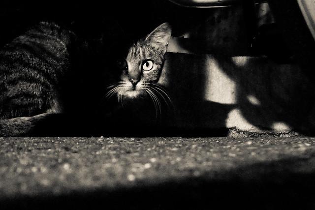Today's Cat@2011-10-29