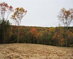 The homesite in October 2011. The view overlooks the western portion of the property where the timber was selectively harvested- it is hard to tell that any timber was removed.