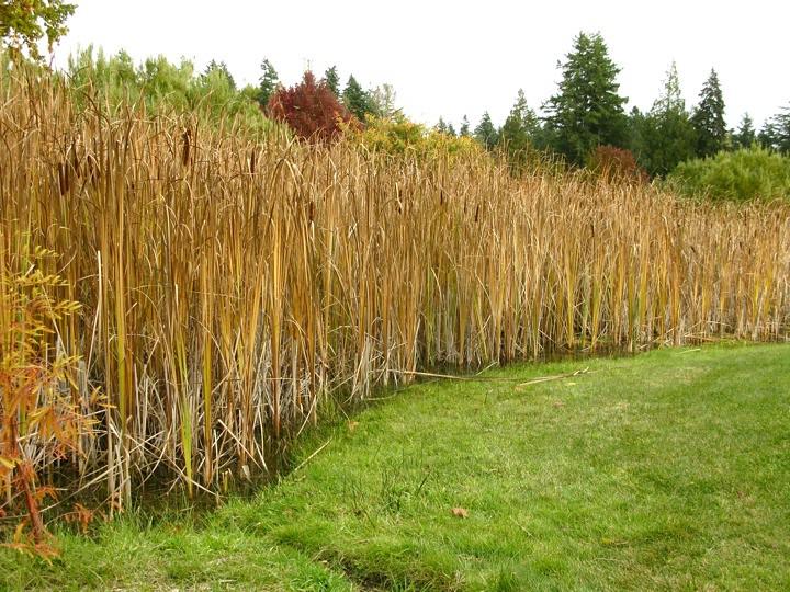 ubc botanical garden 015