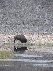IMG_4129 (Almonddew) Tags: travel usa america nationalpark oldfaithful yellowstonenationalpark yellowstone wyoming grandtetons wilderness tetons grandteton jacksonhole almonddew