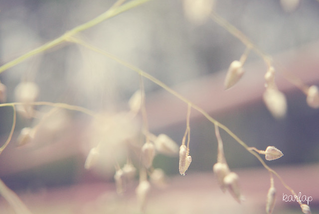 soft nature...