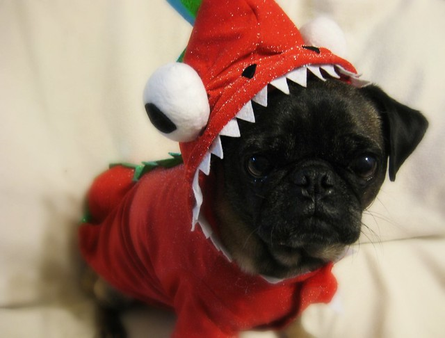 Pug the Magic Dragon