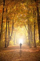 autumn berlin tiergarten (digger- on/off) Tags: herbst autumn berlin tiergarten canon eos 40d sigma 70mm leaf bltter bunt orange colours contrast tree wood shadow light licht schatten bume