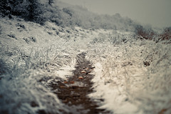 Quietly (Standard Deluxe) Tags: autumn snow 100mm wilderness tallgrass dirtpath canonef100mmf28lisusm 10028lis