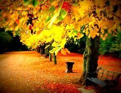 Preston is my Paris (Tony Worrall) Tags: uk autumn trees england urban fall leaves bench northwest path walk seat lancashire walkway preston picnik lancs avenham avenhamcolonnade prestonismyparis
