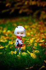 Enchanted Autumn Stroll