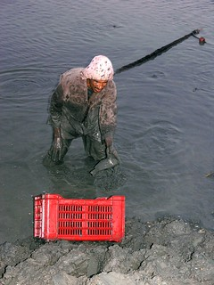 Aquaculture, Egypt. Photo by Jamie Oliver, 2008