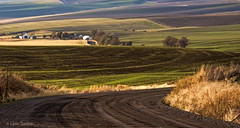 Heading west (walla2chick) Tags: road autumn usa fall washington hills wa wallawalla scenicloop topazadjust 20667tpz