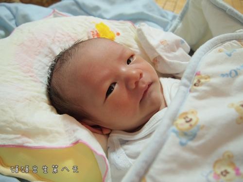 出生第八天3