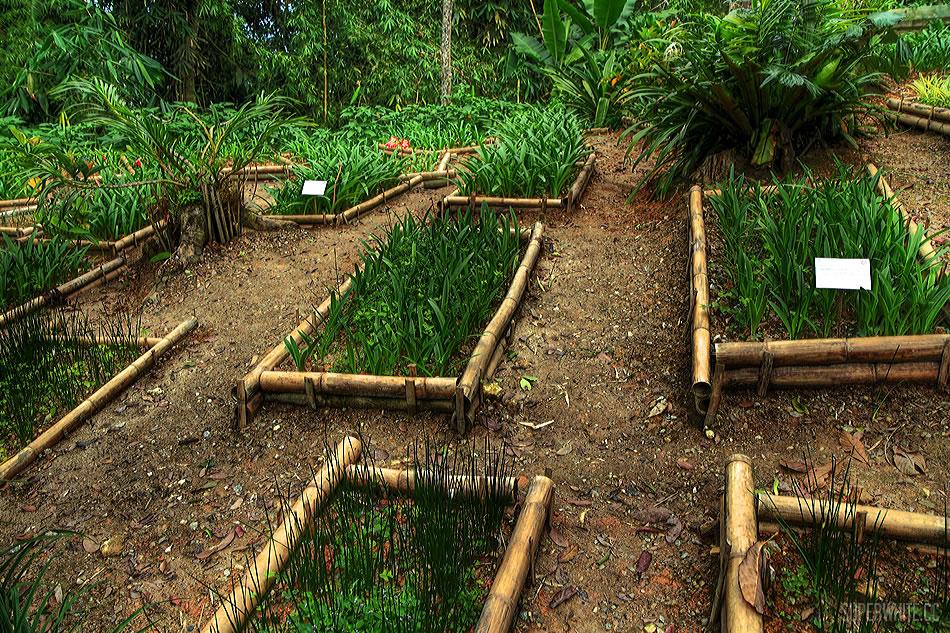 Japanese Garden Grass HDR