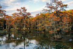 Rusty Mill (ShutterByMe) Tags: statepark autumn fall water pond texas tx bayou swamp lilypads cypresstrees millpond caddolake caddolakestatepark bigcypressbayou karnarcktexas