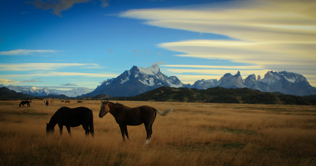 Patagonian Horses at the trailhead of the W-circuit (april 2010)