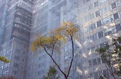 (EYECCD) Tags: nyc autumn newyork building tree fall colors delete10 delete9 delete5 delete2 construction scaffolding mesh delete6 delete7 delete8 delete3 delete delete4 maintenance restoration 550d deletedbydeletemeuncensored