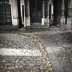 paris (beryl) Tags: street autumn paris france leaves square stones cemetary deadleaves cobblestones sidewalk squarecrop cimetieredemontmartre nikond90