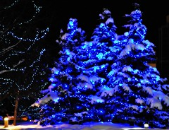 Town Square, Anchorage (Luv Duck - Thanks for 15M Views!) Tags: christmas christmaslights anchorage christmastrees townsquare