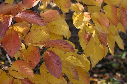 fall leaves 005