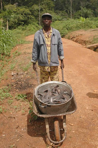 Fisherman with harvested fish, Cameroon. Photo by Randall Brummett, 2002