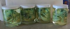 Cthulhu Jars