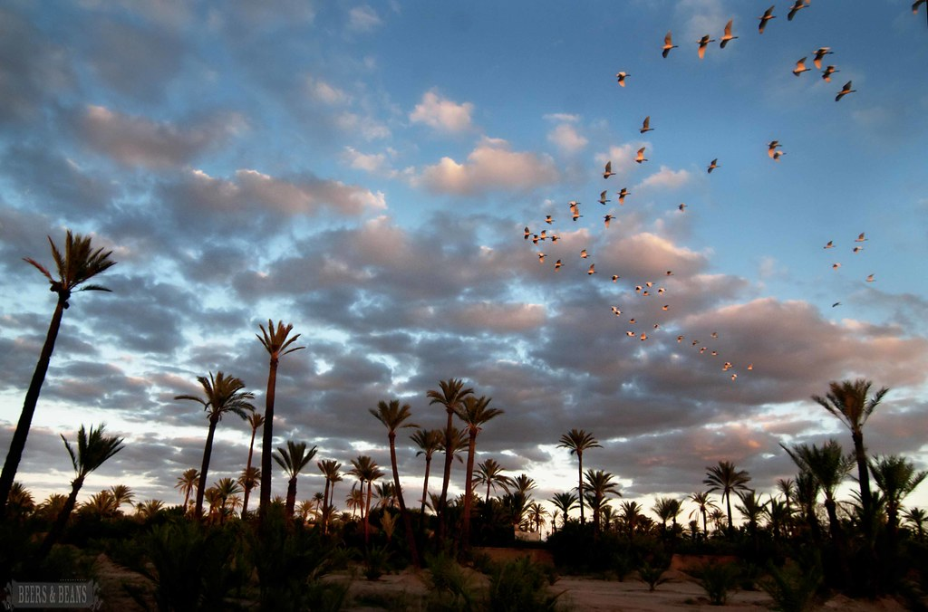 Marrakech Camel Ride 6