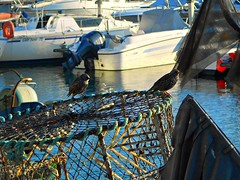 Starlings on Lobster Pots (soulman53) Tags: uk november autumn england nature birds sussex brighton starling lobsterpots 2011 brightonmarina