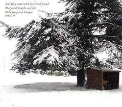 Luke 2:6 (Hilary bornagain1198) Tags: shadow snow tree nature god manger bible spruce scripture belper memorialgardens winter2010 luke26