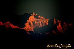 Golden Mountain (Monsoon Lover) Tags: morning india flickr earlymorning bengal darjeeling goldenmountain goldenpeak kanchanjangha jorepokhri sudipguharay sunrisekanchanjangha