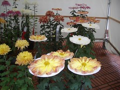 IMGP2074 (naohisa1971) Tags: flower niigata bandai